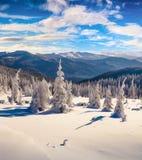 Живописное утро зимы в прикарпатских горах с коровой снега Стоковые Фото