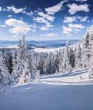 Живописное утро зимы в прикарпатских горах с cov снега Стоковое фото RF
