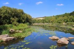 Живописные банки черепашки реки южной Стоковые Фотографии RF