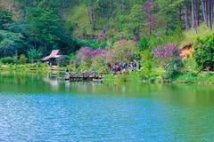 Живописные зеленые озеро и лес весной стоковые фото