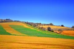 Живописные красочные поля Стоковое Изображение