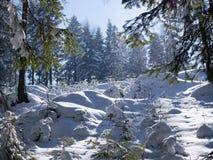 Живописные ландшафты зимы ландшафтов горы в солнечном свете стоковые изображения