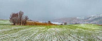 Живописные поля в зиме первый снежок стоковые изображения rf