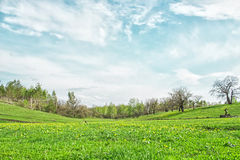 Живописный ландшафт с зеленой травой и облаками цирруса в дне лета солнечном Стоковое Изображение