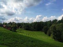 Живописный взгляд холма и поля с ростками стоковое фото