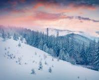 Живописный восход солнца зимы в прикарпатских горах с коровой снега Стоковая Фотография