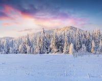 Живописный восход солнца зимы в прикарпатских горах с cov снега Стоковое Фото