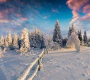 Живописный восход солнца зимы в прикарпатских горах с cov снега Стоковое Изображение RF