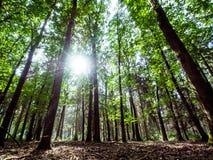 Живописный лес загоренный по солнцу Стоковые Фото