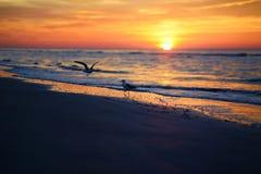 Живописный заход солнца на пляже стоковые изображения