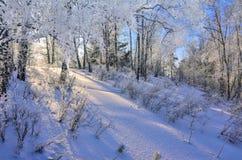 Живописный ландшафт зимы в замороженном лесе березы на солнечном Стоковое Изображение
