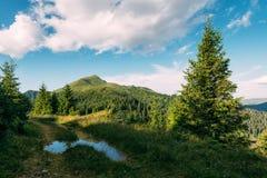 Живописный ландшафт лета в солнечном дне стоковая фотография rf