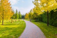 Живописный ландшафт с переулком прогулки выровнялся с плитками и желтыми деревьями осени стоковое изображение