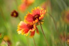 Живописный луг Полевые цветки на поле лета Цветки в цветении Цвести цветки на ландшафте природы идиллично стоковое фото