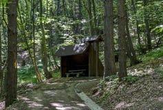 Живописный путь через зеленый лес с укрытием стоковая фотография