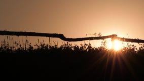 Живописный сельский ландшафт Заход солнца на поле дальше освещает контржурным светом Деревянные загородка и трава лета с заходом  видеоматериал