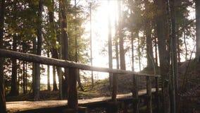 Живописный старый глубокий мост леса сток-видео