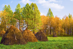 Живописный луг с стогами сена Стоковые Фото