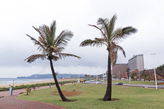 2 живописных пальмы на Дурбане пляжном Стоковые Изображения RF
