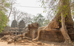 Животики Prohm, Angkor Wat, Siem Reap, Камбоджа Животики Proh 22-ое июля 2015 Стоковое Изображение RF