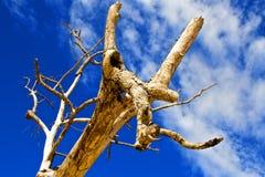 животная головка Стоковое Фото