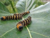 Животная гусеница стоковое изображение