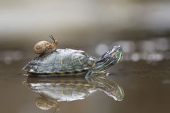 Животная живая природа, птицы, сыч, крокодил, вода, отражения, животные, лягушка, лодкамиамфибии, животное, animales, animalwildl Стоковые Фото