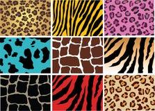 животная кожа Стоковые Фотографии RF