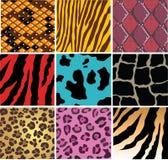 животная кожа Стоковые Изображения RF
