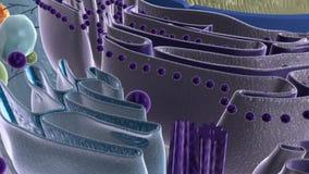 Животная клетка бесплатная иллюстрация