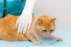 Животная клиника - кот получая ruff стоковое изображение rf