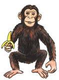 животная обезьяна Стоковые Фотографии RF