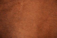 животная польза текстуры шерсти предпосылки Стоковые Изображения RF
