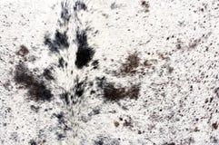 животная превосходная шерсть Стоковые Фотографии RF