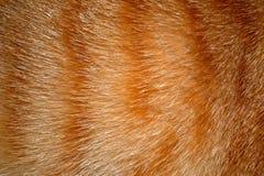Животная предпосылка текстуры шерсти Стоковое Изображение