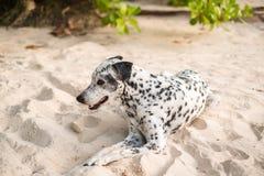 Животная собака предпосылки сидит самостоятельно на пляже во времени дня Стоковая Фотография