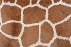 Животная текстура предпосылки жирафа пятнает картину стоковая фотография rf