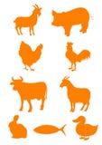 животная ферма Стоковое Изображение