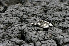 Животная челюсть на высушенной почве стоковые изображения