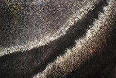 животная шерсть Стоковая Фотография