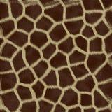 животная шерсть Стоковые Фотографии RF