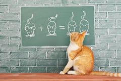 Животная школа стоковые фото