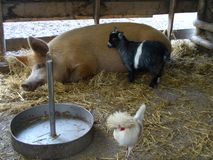 Животноводческие фермы в покое Стоковые Изображения