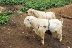 Животноводческая ферма в Испании стоковые изображения
