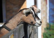Животноводческие фермы Стоковая Фотография RF