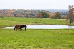 Животноводческие фермы Стоковое Фото