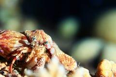 Животное актиния Стоковые Изображения