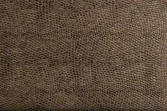 животное высокое textur кожи гада качества patten Стоковые Изображения RF