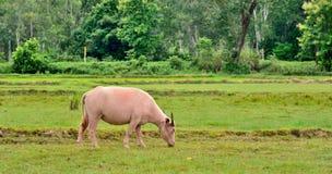 Животное в Таиланде стоковое фото rf