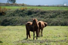 животное в траве Стоковое Изображение
